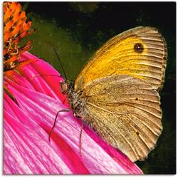 Artland Wandbild Großes Ochsenauge, Insekten (1 Stück) 30 cm x 30 cm