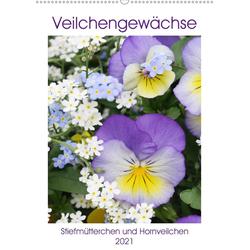 Veilchengewächse Stiefmütterchen und Hornveilchen (Wandkalender 2021 DIN A2 hoch)