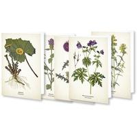"""Quelle & Meyer Kunstklappkarten """"Flora"""""""