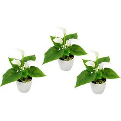 Kunstpflanze Mini Calla Calla, I.GE.A., Höhe 20 cm weiß