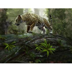 Home affaire Fototapete Jaguar on the Prowl