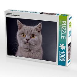 Britisch Kurzhaar Katzen Lege-Größe 64 x 48 cm Foto-Puzzle Bild von weh-zet Puzzle