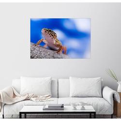 Posterlounge Wandbild, Leopardgecko auf Blau 90 cm x 60 cm