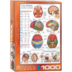 empireposter Puzzle Das Gehirn Funktion, Anatomie und Chirurgie - 1000 Teile Puzzle im Format 68x48 cm, Puzzleteile
