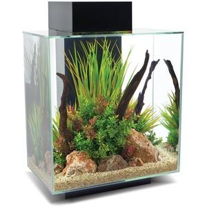 Fluval Edge 2.0 Aquarium, 46L, schwarz