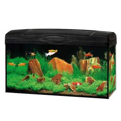 Dehner Aquarien-Set Aquarium Starterset Scout mit LED, 60 x 30 x 30 cm