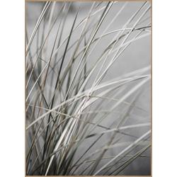 Poster MELLOW GRASSES 1 (BH 70x100 cm)