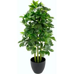 Kunstpflanze Schefflerapflanze, I.GE.A., Höhe 83 cm, im Kunststofftopf