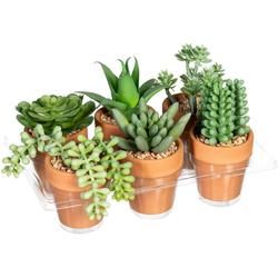 Künstliche Zimmerpflanze Mini-Sukkulenten Sukkulente, Creativ green, Höhe 9 cm, im Tontopf, 6er Set