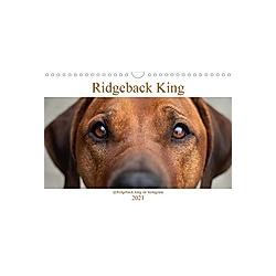Ridgeback King (Wandkalender 2021 DIN A4 quer)