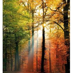 Vliestapete »Goldener Herbst«, Tapeten, 75923840-0 bunt Maße (B/H): (240/260 cm) bunt