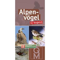 Alpenvögel im Vergleich
