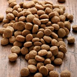 alsa-nature Big-Junior Medial Protein Trockenfutter, 2 x 12 kg, Hundefutter trocken