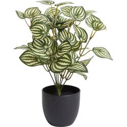 Künstliche Zimmerpflanze Zebrina Zebrina, Botanic-Haus, Höhe 30 cm