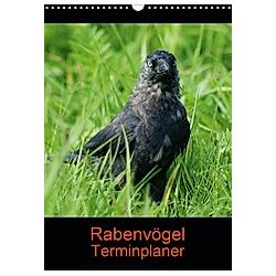 Rabenvögel Terminplaner (Wandkalender 2021 DIN A3 hoch)