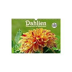 Dahlien - Blütenpracht im Spätsommer (Wandkalender 2021 DIN A4 quer)