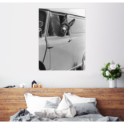 Posterlounge Wandbild, Esel schaut aus dem Autofenster 30 cm x 40 cm