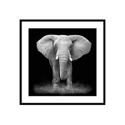 HTI-Line Kunstdruck Bild Elefant, Wandbild
