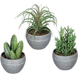 Künstliche Zimmerpflanze Sukkulenten Sukkulente, Creativ green, Höhe 14 cm, im Melamintopf, 3er Set
