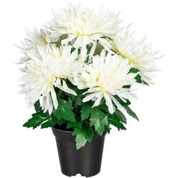 Künstliche Zimmerpflanze Igraine Chrysantheme, Home affaire, Höhe 32 cm