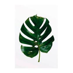 Komar Poster Monstera Leaf, Pflanzen, Blätter, Höhe: 50cm 30 cm x 40 cm