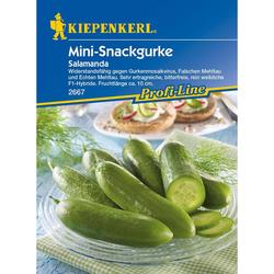 Mini-Snackgurke / Salatgurke Salamanda, F1