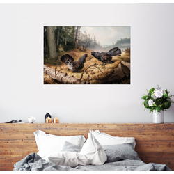 Posterlounge Wandbild, Kampf der Auerhähne 60 cm x 40 cm