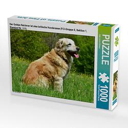 Der Golden Retriever ist eine britische Hunderasse (FCI-Gruppe 8, Sektion 1, Standard Nr. 111). Lege-Größe 64 x 48 cm Foto-Puzzle Bild von DeVerviers Puzzle