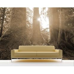 Bilderdepot24 Deco-Panel, Fototapete - Regenwald bunt 265 cm x 200 cm