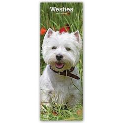 West Highland White Terrier - Westies 2021