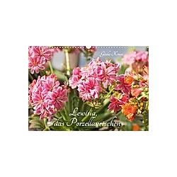Lewisia, das Porzellanröschen (Wandkalender 2021 DIN A3 quer)