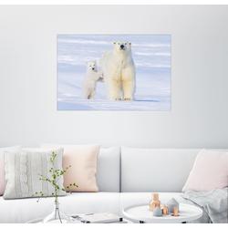 Posterlounge Wandbild, Eisbärfamilie 130 cm x 90 cm