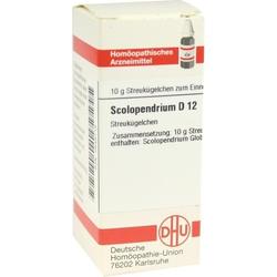 SCOLOPENDRIUM D12