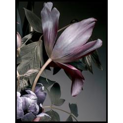 Poster DARK FLOWERS 3 (BH 30x40 cm)