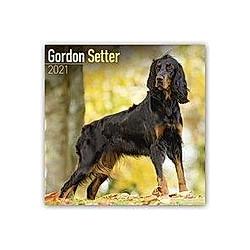 Gordon Setter 2021