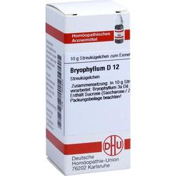 Bryophyllum D12