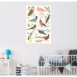 Posterlounge Wandbild, Vogelarten 60 cm x 90 cm