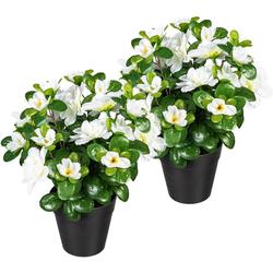 Künstliche Zimmerpflanze Annelie Azalee, my home, Höhe 26 cm, 2er Set weiß