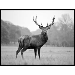 Poster WILDLIFE ANIMALS (BH 40x30 cm)