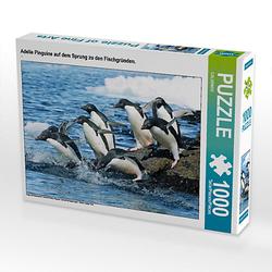 Adelie Pinguine auf dem Sprung zu den Fischgründen. Lege-Größe 64 x 48 cm Foto-Puzzle Puzzle