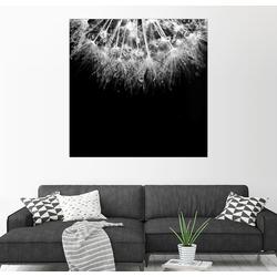 Posterlounge Wandbild, Makroaufnahme einer Pusteblume 100 cm x 100 cm