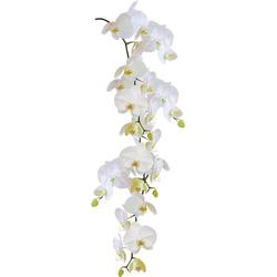 Kleine Wolke Fensterfolie Statics Orchid, selbsthaftend