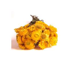 Trockenblume Strohblumen Helichrysum Trockenblumen Strauß Bund Blumen getrocknet DIY Strohblume, ROSEMARIE SCHULZ Heidelberg, Höhe 10 cm gelb