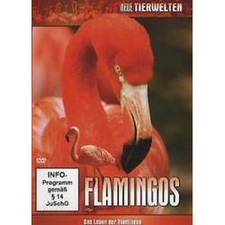 Heroes Flamingos - Das Leben der Flamingos, 1 DVD (2010) Neu DVD-Player (dvd)