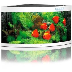 JUWEL Trigon 350 LED Aquarium, 350 Liter, weiß