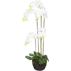 Kunstorchidee Orchidee Orchidee, Botanic-Haus, Höhe 125 cm