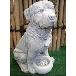 Hund mit Schale