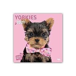 Yorkies - Yorkshire Terrier 2021