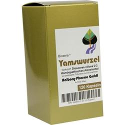 Yamswurzel