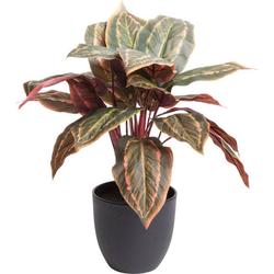 Künstliche Zimmerpflanze Calathea Calathea, Botanic-Haus, Höhe 43 cm
